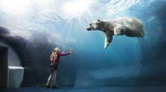 Copenhagen's top attractions | Zoo