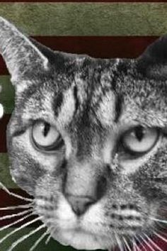 A Cat Named Limberbutt McCubbins Is Officially Running For President, Because 2016