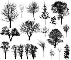 arbre sans feuille