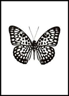 Poster met zwart-wit vlinder op witte achtergrond