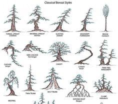 Bonsai Styles : Seni Bonsai Kunak Ficus Bonsai Tree, Bonsai Styles, Topiary, Terrarium, Wire, Garden, Nature, Plants, Ideas