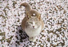 桜の花びらを乗せた猫さんにとっても和む♪