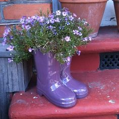 Wellies used as plant pots Container Gardening, Gardening Tips, Potted Plants, Plant Pots, Wellies Boots, Dream Garden, Hunter Boots, Garden Inspiration, Rubber Rain Boots