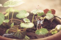 Unique Wedding Photography Poses Turns Couples Into Miniature People. These photo shots will surely blow your mind away. Photo Macro, Miniature Photography, Wedding Photography Tips, Photography Business, Photoshop, Tiny World, Photo Couple, People Art, Wedding Shoot