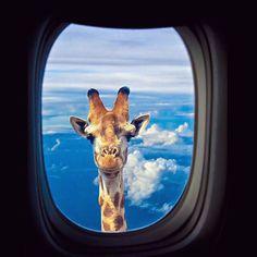 Edited with DeluxeFX app --- photo by dear @digital_editz [insert giraffe emoji here]  by izkiz