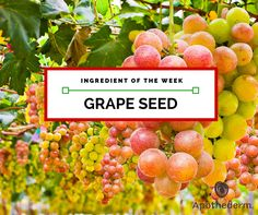 Grape seed is known for antioxidant health benefits foryour skin. Learn more about grape seed and what facial serums Apothederm Skin Care uses it in.