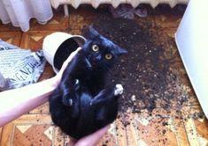 In dem Blumentopf war eine Maus, ich schwöre es | Webfail - Fail Bilder und Fail Videos