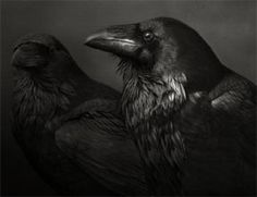Beth Moon, born 1956 (my note: The maid was in the garden, Hanging out the clothes, When down came a blackbird And nipped off her nose! - Song of Sixpence)