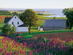 I want to visit Prince Edward Island. Then I can pretend to be Anne of Green Gables. I want to visit Prince Edward Island. Then I can pretend to be Anne of Green Gables. I want to visit Prince Edward Island. Then I can pretend to be Anne of Green Gables. Oh The Places You'll Go, Places To Travel, Places To Visit, Prince Edward Island, Anne Auf Green Gables, Pei Canada, Destinations, Indian Summer, The Ranch