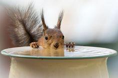 20+ Adorable Pics To Celebrate Squirrel Appreciation Day | Bored Panda