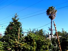 A California Christmas. Ripe in North Park, San Diego