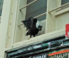 probably not taxidermy. regardless: camera birds in the city of utrecht, panopticons project