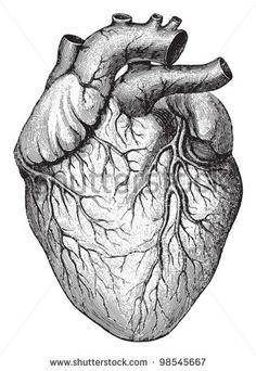 Coração humano / ilustrações vintage de Frau Die als Hausarztin 1911