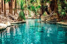 Mataranka Hot Springs near Darwin, Northern Territory, Australia Beautiful Places To Travel, Romantic Travel, Beautiful Beaches, Australia Travel, Campervan Australia, Overseas Travel, Travel And Leisure, Travel Tips, Travel Destinations