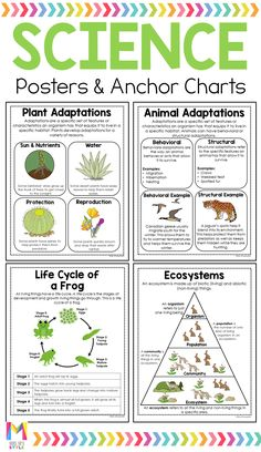 Help your elementary students learn important science concepts with these anchor charts. These student friendly posters are the perfect addition to your students' interactive science notebooks. Science Worksheets, Science Curriculum, Science Classroom, Teaching Science, Science Education, Science For Kids, Physical Science, Earth Science, Science Penguin