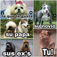 20 Memes que prueban que el perro Chilaquil se robó nuestros corazone