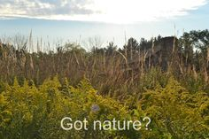 Got nature? Nature Center, Nature Quotes, Cincinnati, Inspirational, Mountains, Travel, Viajes, Traveling, Trips