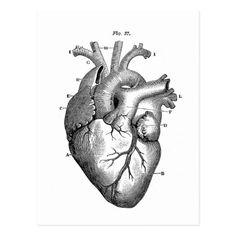 Vintage Herz-Anatomie   kundengerecht Postkarte                                                                                                                                                                                 Mehr