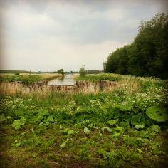 Holland, field