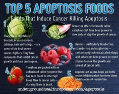 """How to Fight Cancer with Food-Induced Apoptosis: Apoptosis is a natural process that occurs in the human body to maintain a balance between cell death and cell renewal. Cells that are abnormal, damaged or no longer needed are """"killed off"""" and flushed from the system.  Increasing your intake of these top 5 apoptosis enriched foods and other bioactive antioxidant-rich foods will boost healthy apoptosis naturally and lower your cancer risk…one bite at a time."""