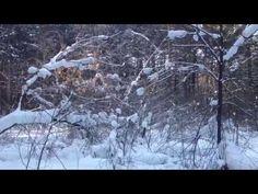 Лес зимой , красивая природа прогулка. Заельцовский бор Новосибирск.