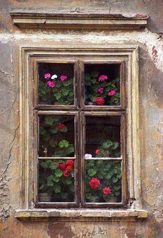 abriendo-puertas:  Geraniums, Levoca, Slovakia. By Dstaples photography