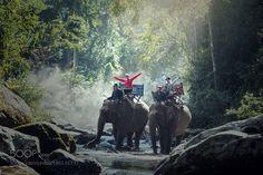 Popular on 500px : Elephant trekking through jungle in northern Laos by SasinTipchai