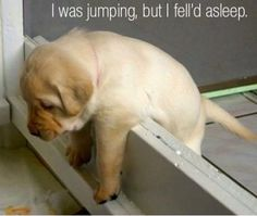I was jumping, but I fell asleep.