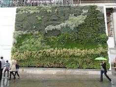 """obra """"Campo de Trigo com Ciprestes (1889) de Vincent Van Gogh, o """"The Living Wall"""" - muro vivo - foi criado  através de um projeto da National Gallery de Londres patrocinado pela GE (General Elétric), com o intuito de trazer a Arte para a vida sensibilizando o público, para assim, reforçar a consciência ambiental sobre a importância da Natureza não só nas grandes metrópoles, como em nossas vidas"""