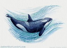 "Giclée Art Print • ""Orca Splash"" watercolor killer whale art by Amber Marine ••• AmberMarineArt.com ••• ©"