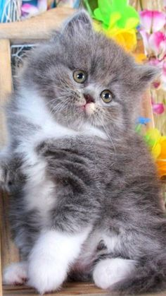 Cute Little Kittens, Cute Baby Cats, Cute Baby Animals, Kittens Cutest, Animals And Pets, Beautiful Kittens, Pretty Cats, Animals Beautiful, Baby Animals Pictures