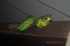 Frogs Frogs, My Love, Animals, Animales, Animaux, Animal, Animais