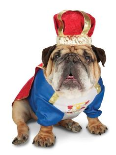 English Bull-Dog Royal King Costume.