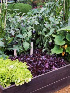 Intense raised bed gardening