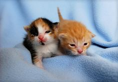 Two gorgeous kittens.