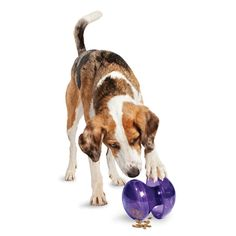 Tip, flip, roll, and treat! The Busy Buddy Magic Mushroom keeps dogs engaged as they work for their food. Use as a tool to assist with weight management efforts or as a fun way to reward and challenge your dog at the same time. It's the perfect way to turn mealtime into playtime!