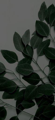 Spring Wallpaper, Plant Wallpaper, Dark Wallpaper, Screen Wallpaper, Flower Wallpaper, Galaxy Wallpaper, Nature Wallpaper, Cute Wallpaper For Phone, Iphone Background Wallpaper