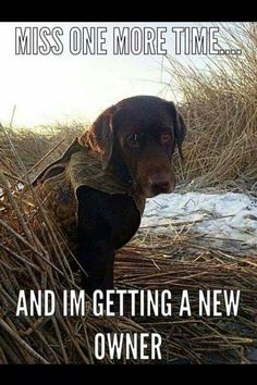 All who hunt have gotten this look before from our partner lol Labrador Retriever Deer Hunting Humor, Hunting Jokes, Funny Hunting Quotes, Duck Hunting Dogs, Redneck Quotes, Redneck Humor, Hunting Stuff, Turkey Hunting, Funny Animal Pictures