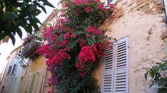Kletterpflanzen - Dorf in der Provence