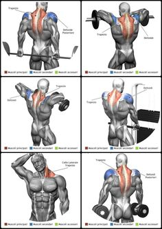 Build cannonball shoulder muscles with this high-intensity, circuit workout. … Build cannonball shoulder muscles with this high-intensity, circuit workout. Traps Workout, Gym Workout Tips, Weight Training Workouts, Biceps Workout, Fitness Workouts, Model Workout, Trapezius Workout, Build Shoulders, Workout Routines