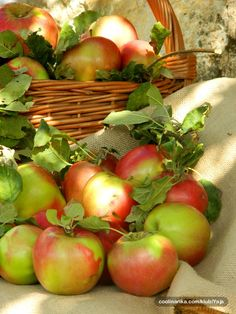 this morning apples came to my mind, maybe i should eat Apple Plant, Apple Tree, Red Apple, Apple Farm, Apple Orchard, Homemade Cider, Apple Decorations, Apple Season, Apple Harvest