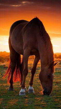 Horse Wallpaper - NawPic
