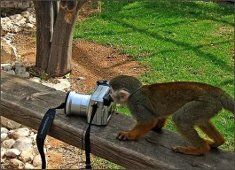 45 Photographers That Are Real Animals. And Birds, And Reptiles. Photography Camera, Digital Photography, Funny Animals, Cute Animals, Monkey 2, Old Cameras, Tier Fotos, Through The Looking Glass, Primates