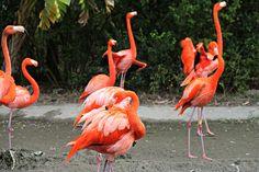 Look at all the flamingos!