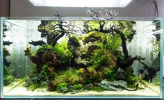 """My 90P tank, one month in (see day 1 here). I started calling it """"the Leviathan"""", but at some point I thought I'd call it """"Organism"""". I am still hesitant which would better fit this aquascape :)"""