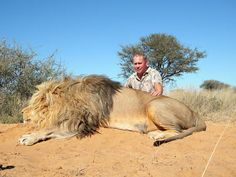 Petition: Stop Lion Canned Hunting in South Africa – Shocking Video » Focusing on Wildlife