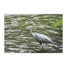 Great Blue Heron Wrapped Canvas Print as shown, $163.00.