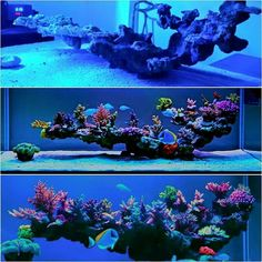 I like that not much of it touches the sand bed. Quite minimal and elegant – aquascaping Saltwater Aquarium Setup, Coral Reef Aquarium, Saltwater Fish Tanks, Marine Aquarium, Aquarium Fish Tank, Marine Fish Tanks, Marine Tank, Nano Reef Tank, Reef Tanks