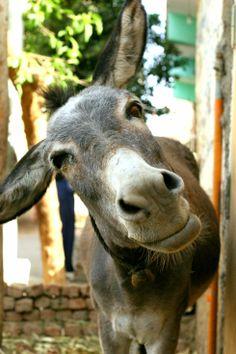 Egypt donkey. Photo by Ria van Capel, 2007
