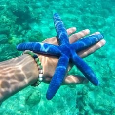 Deep sea beauties! Help us support World Wildlife Fund by purchasing a wild lokai!
